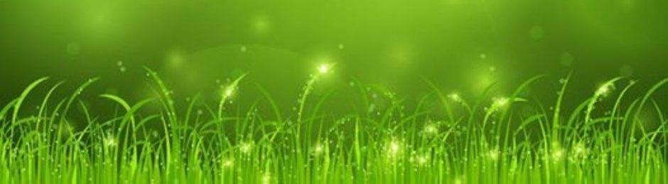 カテゴリー: 植物の力